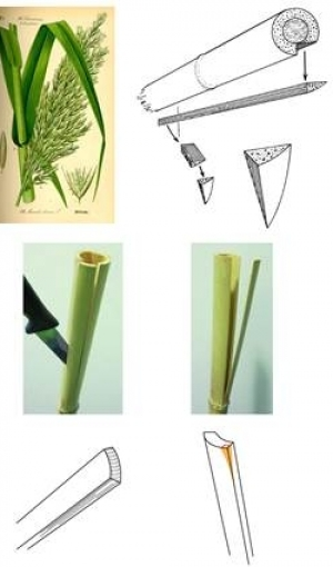 Fig. 3:  Arundo donax (giant reed); possible ways to split the stalk in order to obtain a stylus (drawings by J. Marzahn and A. Bramanti).